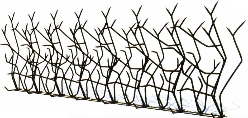 حفاظ شاخ گوزنی نرده بوته ای